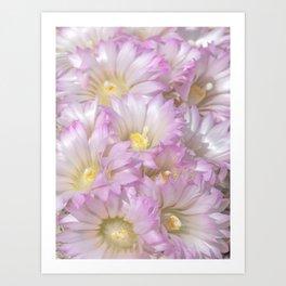 Soft Cactus Blossoms, Desert Floral Art by Murray Bolesta Art Print