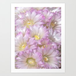 Soft Cactus Blossoms, Desert Floral Art by Murray Bolesta Art Print