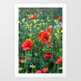 Summer Wild Flowers  Art Print