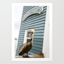 California Brown Pelican on Pier Art Print