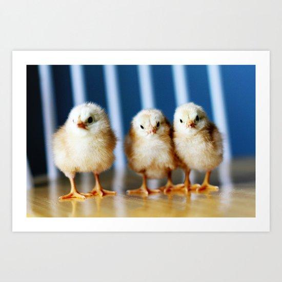 buckeye chicks Art Print