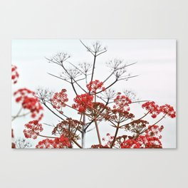 WILDFLOWERS in RED Canvas Print