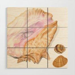 Seashells 01 Wood Wall Art