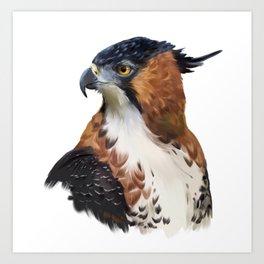 Hawk Eagle Art Print