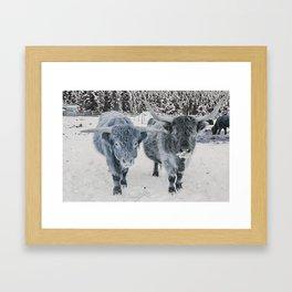 Scotish Highland cattle Framed Art Print