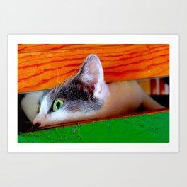 Coda Cat Juju! Art Print