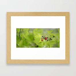 Raspberry Sunrise Framed Art Print