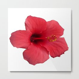 Stunning Red Hibiscus Flower Metal Print