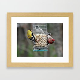 Nuts in common Framed Art Print