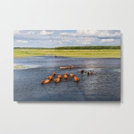 Natural bucolic view in Biebrza wetland Metal Print