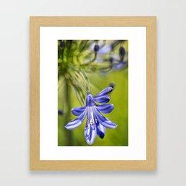 Macro Flower #1 Framed Art Print
