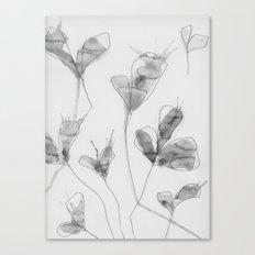 January flowers Canvas Print