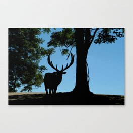 Moose in the Headlights  Canvas Print