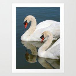 Mute Swan Pair Profile Art Print