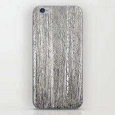 Birch grove iPhone & iPod Skin