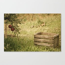 apple crate photograph Canvas Print