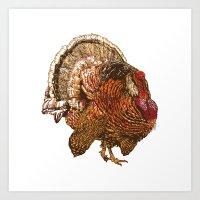Turkey (Color) Art Print