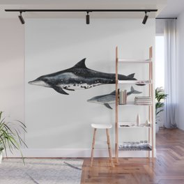 Rough-toothed dolphin (Steno bredanensis) Wall Mural