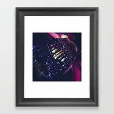 Passiflora Alata - Winged Stem Passion Flower - Ruby Star - Ouvaca Framed Art Print