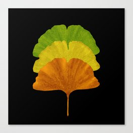 Autumn Ginkgo Canvas Print