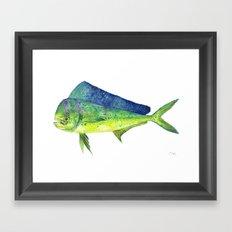 Mahi Mahi Framed Art Print