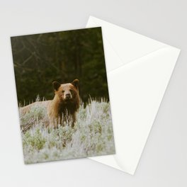 Bush Bear Stationery Cards