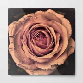 Vintage Rose,peach Metal Print