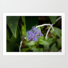 Purple Wildflower Art Print
