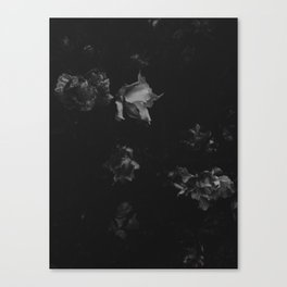Cold Roses (I) Canvas Print