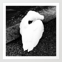 black swan Art Prints featuring Swan by SarahS