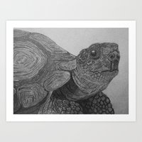 tortoise Art Prints featuring Tortoise by nosila.art
