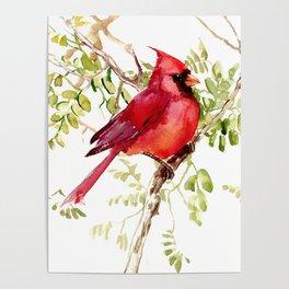 Northern Cardinal, cardinal bird lover gift Poster