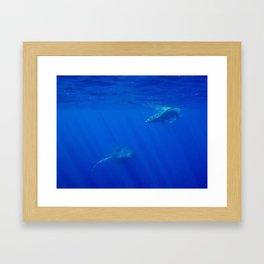 Underwater Humpbacks 4 Framed Art Print