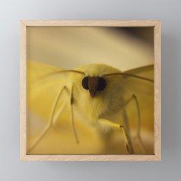 Macro Moth Framed Mini Art Print
