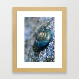 blue snail magic Framed Art Print