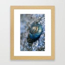 blue snail magic Framed Art Print