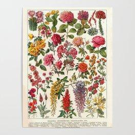 Vintage French Floral Print Poster