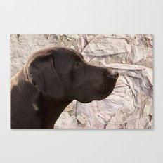 black Labrador Canvas Print