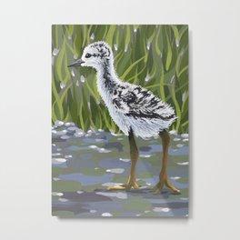 Black-necked Stilt Chick Metal Print