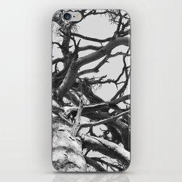 Pinewood iPhone Skin