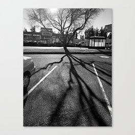 Shadow Tree - Pacific Northwest Canvas Print