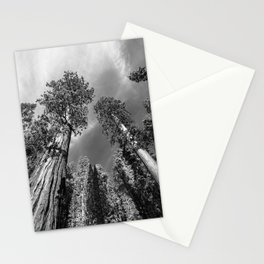 Giant Sequoia Trees in black and white Stationery Cards