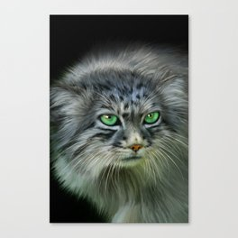 Pallas Cat Canvas Print