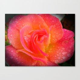 Spring Showered Rose Canvas Print