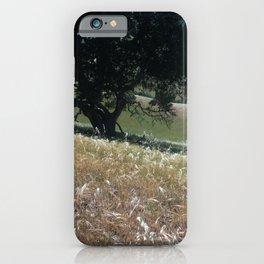 California Live Oak iPhone Case