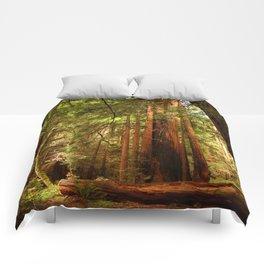 Muir Woods Walkway Comforters