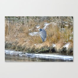 No One To Snuggle With Canvas Print