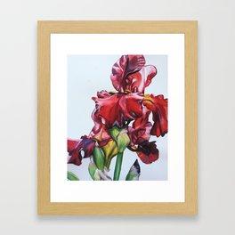 Iris in Spring Framed Art Print