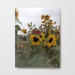 Sunflowers on the Farm Metal Print