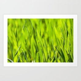 cultivation of cereals. Spring Art Print